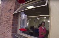 Женщина собрала возле своего офиса 200 колибри, которые не покидают ее