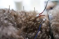 Традиционная медицина: как в Китае лечат домашних животных