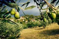 10 путешествий, которые, по мнению National Geographic, нужно совершать осенью