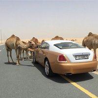 25 фото, доказывающих, что роскошь в Дубае выходит за рамки приличия