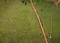 Амазонская сельва оказалась плодовым садом, созданным древней цивилизацией
