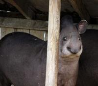 10 очень смешных фото животных, доказывающих, что они тоже бывают нефотогеничными