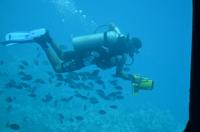 Подводный мир Красного моря через Батискаф