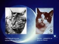 Героиня Франции: как звали первую и единственную в мире кошку-космонавта