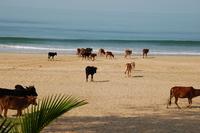 Пустынные майские пляжи Гоа