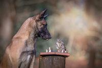 20 фото собаки Инго и ее друга совы — лучшее, что вы можете увидеть сегодня