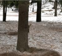 Белочка в Курортном парке