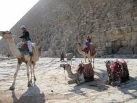 Возле пирамид можно покататься на верблюде