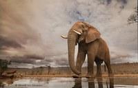 Женщина бросила работу в офисе и стала успешным фотографом дикой природы