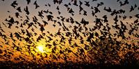 Индийская Джатинга: тысячи птиц прилетают сюда, чтобы совершить самоубийство