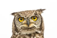 Фотограф делает захватывающие портреты птиц, чтобы спасти исчезающие виды