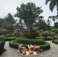 """Тропический ботанический сад """"Нонг Нуч"""" в июне"""