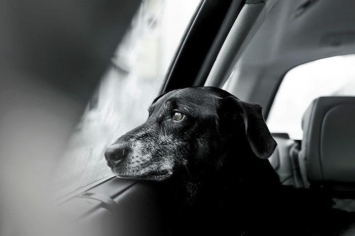 Чудесные победители конкурса лучших фотографий собак, которые сделают день прекраснее