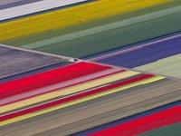 26 впечатляющих фото геометрических форм, найденных в природе