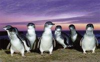 Остров Кенгуру: последний кусочек настоящей Австралии, куда еще не добрались кролики