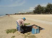 Частенько на пляже валялись водоросли, которые не спешили убирать