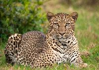 Страна бегунов, леопардов и голландских роз: интересные факты о Кении
