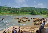Негомбо: я наблюдаю за слониками