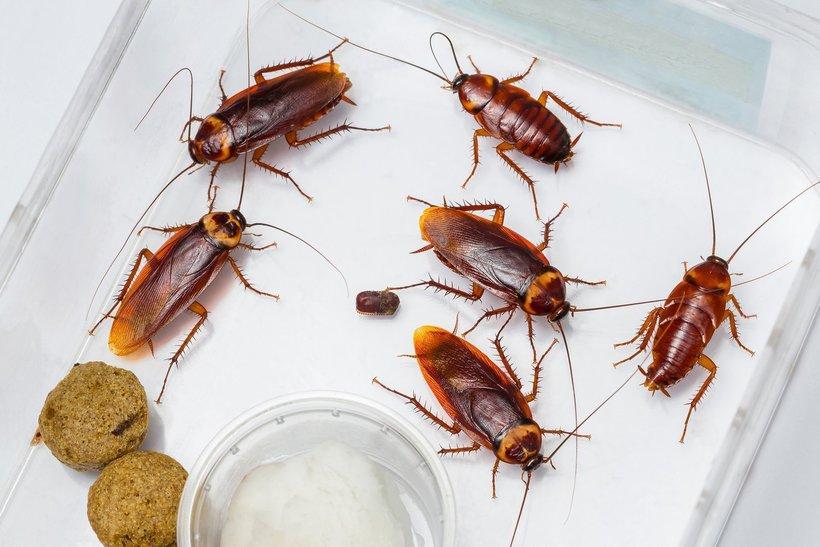 Полная темнота и 6 миллиардов насекомых: зачем китайцы разводят на ферме тараканов