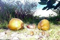 В январе повсюду кокосы