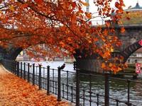 В городе золотая осень!
