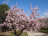 Март в парке La Quinta de los Molinos