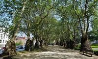 Порту: прогулка по парковой зоне